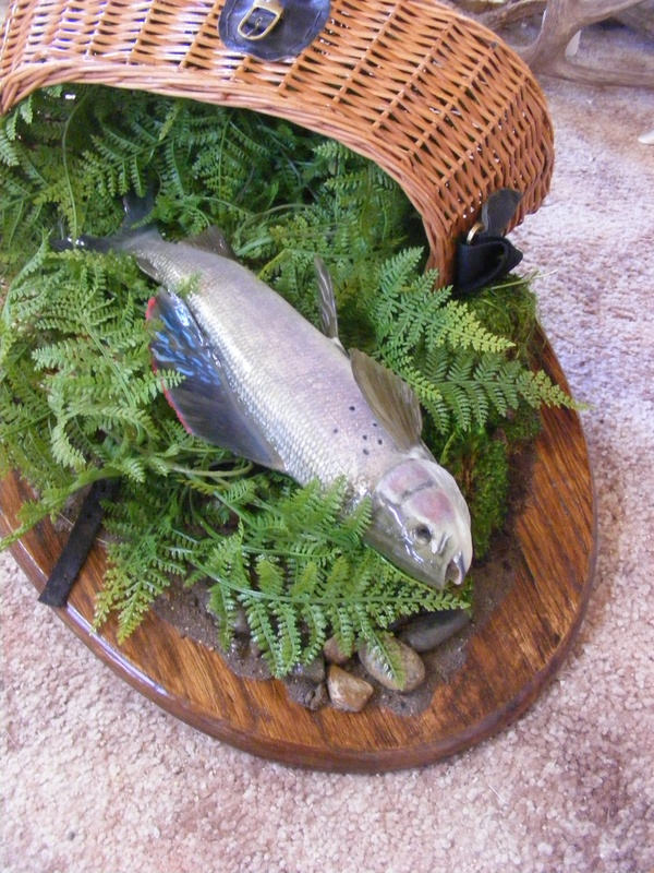 Arctic Grayling  Reproduction