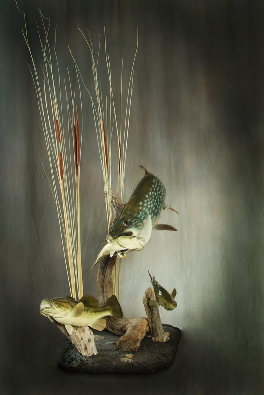 Northern Pike & Largemouth Bass  Reproductions